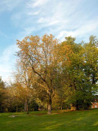 Un arbre du jardin de Malpaga de L'Union à l'automne bien sonné