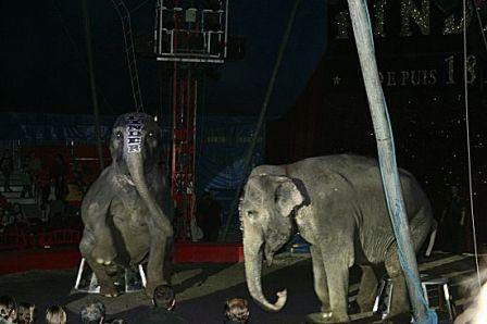 elephantscirquepinder.JPG
