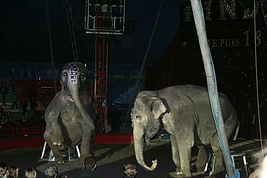 photographie des fameux éléphants