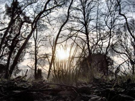 Vert solaire - Photo printemps