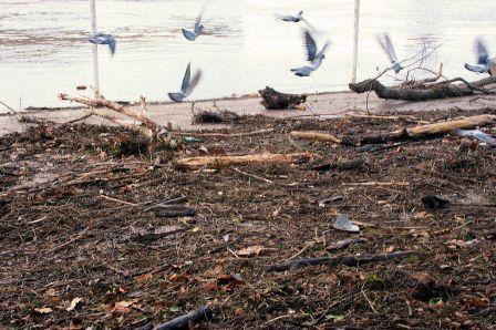 bergesgaronneapreslacrueettempetedu24janvier20095.JPG